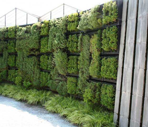 Вертикальные сады и зеленые стены в доме и во дворе