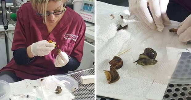 Женщина случайно наступила на улитку, а потом повезла ее в ветеринарную клинику