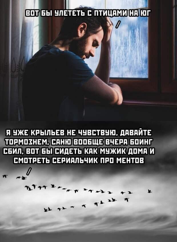 Мысли о птицах