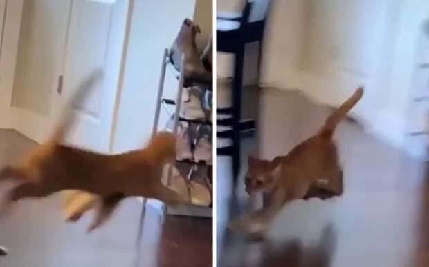Лучший балет: веселые пляски кота с бумажным пакетом попали на видео
