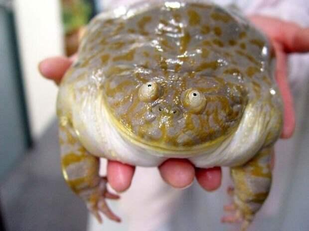 Снимки милых и смешных лягушек, которые заставят улыбнуться
