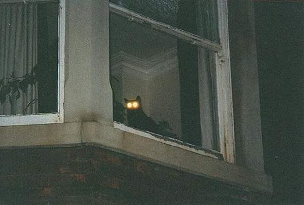 адские коты, злые кошки, evil cat