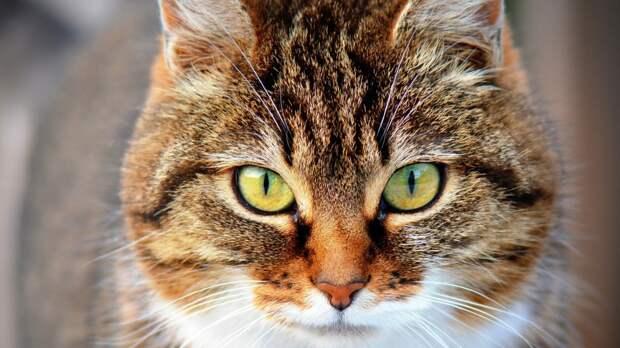 Пухлый кот застрял в окне и задохнулся на Сахалине
