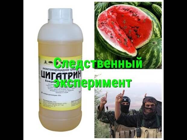Дезинсектор из Урала обработал арбуз ядом и съел его, чтобы доказать безопасность для человека (видео)