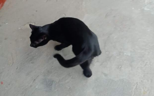 На улице Мневники потерялся чёрный кот