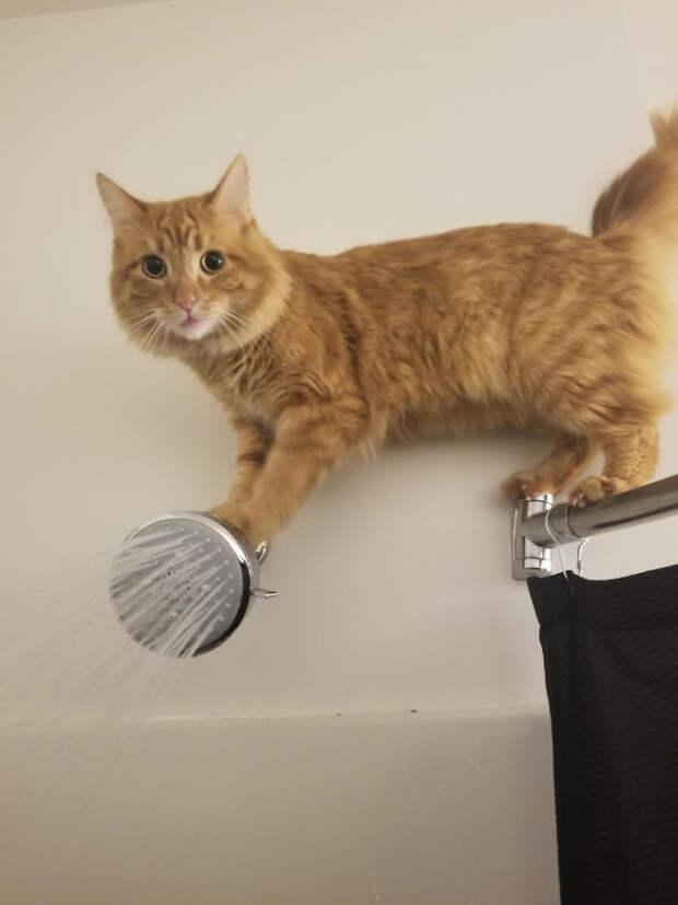 """Фотографии с кошками, которые """"сломались"""" и требуют """"перезагрузки"""""""