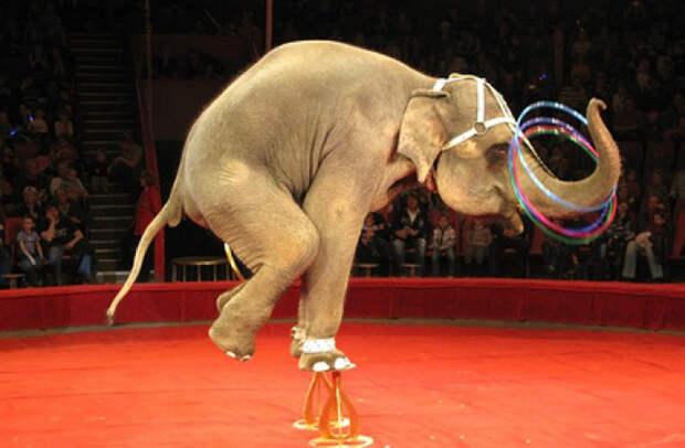 Городской совет Нью-Йорка подписал запрет за использование диких животных в представлениях.