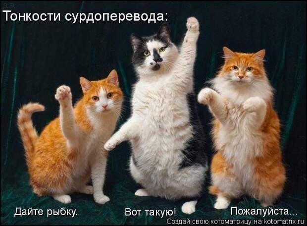 1451737520_kotomatricy-11