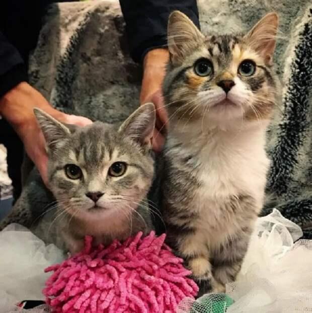 Разные котята