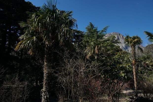 форос форосский парк природа зелень крым горы пальмы