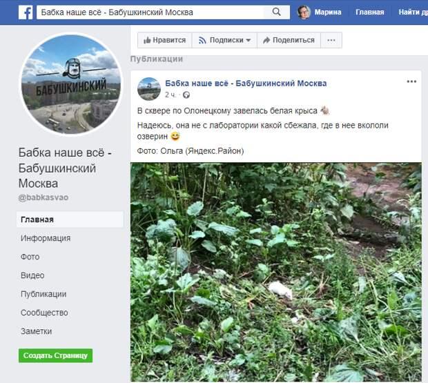 Белую крысу заметили в сквере в Бабушкинском