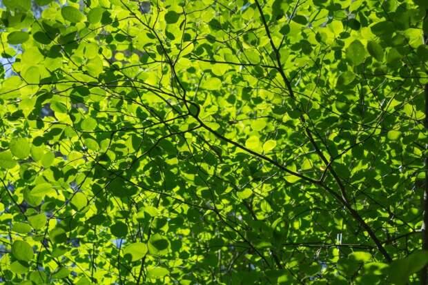Мешают ли проникновению света в квартиру рядом растущие деревья — новый опрос