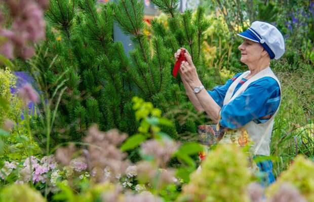 Фестиваль «Цветочный джем» пройдет на Юровской