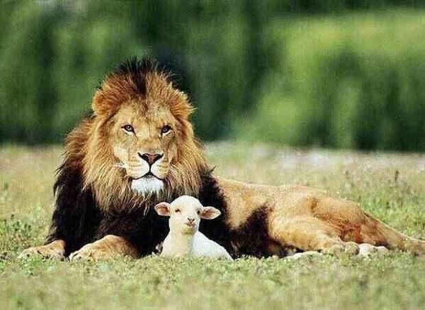 ТАКАЯ LIFE) животные, жизнь, фото