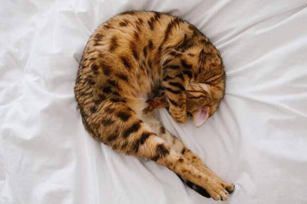 Как часто на самом деле нужно стирать постельное белье