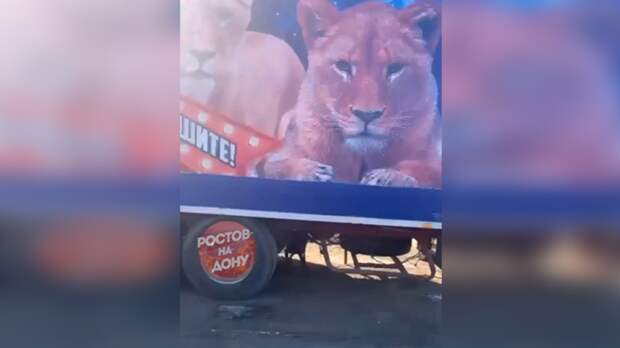 У«голодных львов» вРостовской области нашелся хозяин