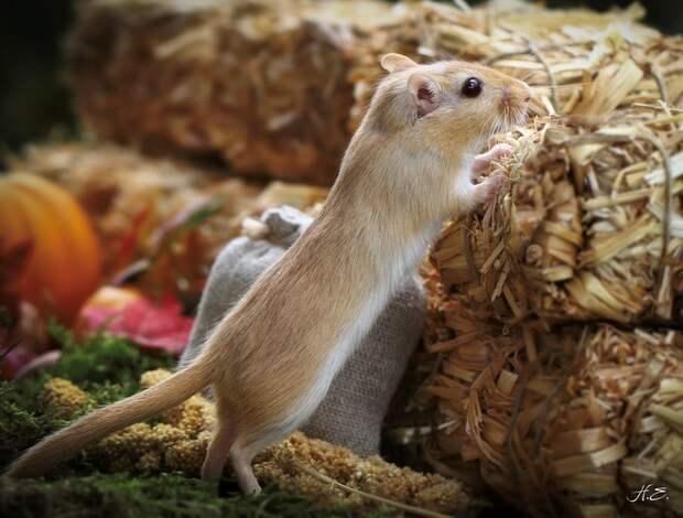 Забавные мышата.