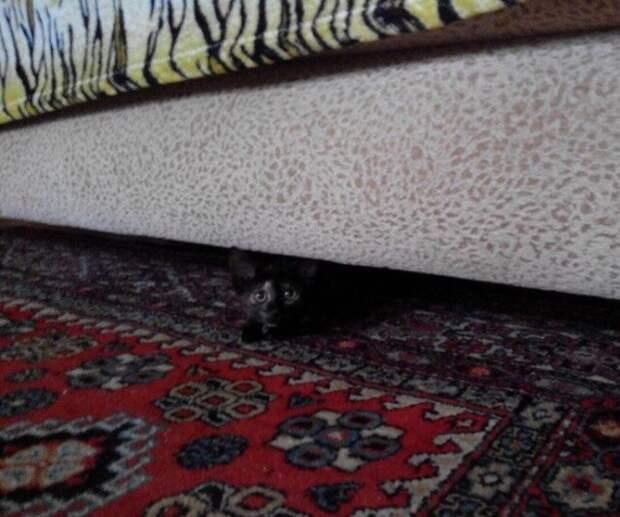 Люди услышали громкий плач котенка из-за забора котенок, кошка