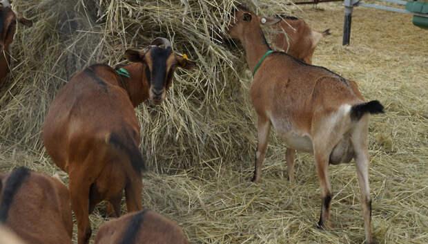 Около 140 тыс сельхозживотных прошли карантин в Подмосковье в этом году