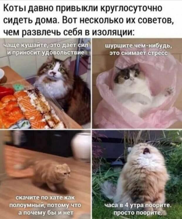 Эти забавные коты. Чтобы вы улыбнулись)