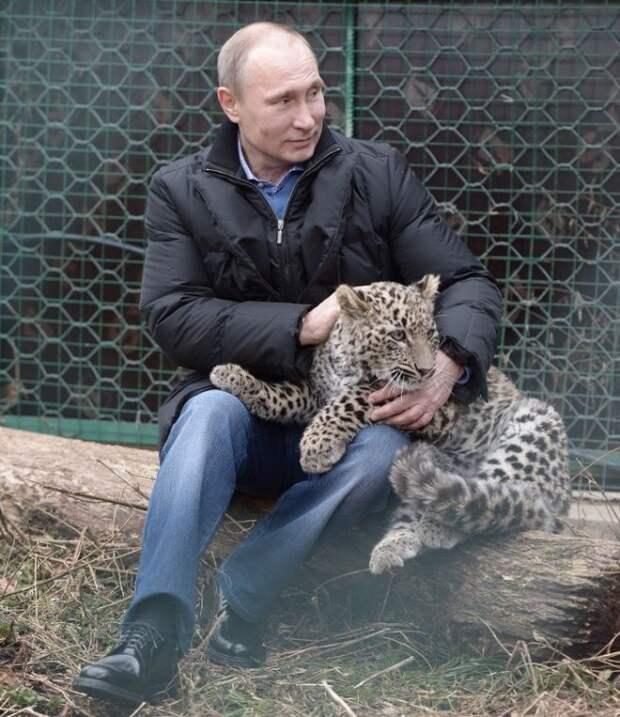Путин и рысь