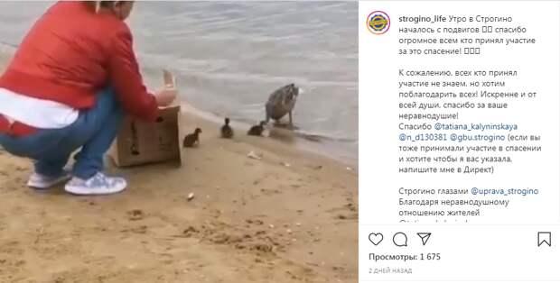 Утиные истории в Строгине: сотрудники МЧС и жители района спасли утят