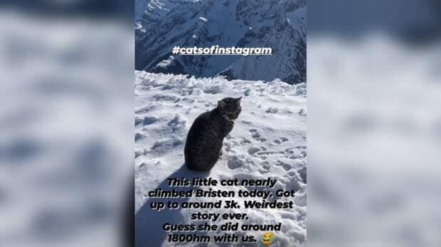 Кошка трижды поднималась в швейцарские Альпы в поисках хозяев
