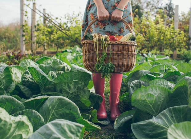 Секрет повышения урожайности