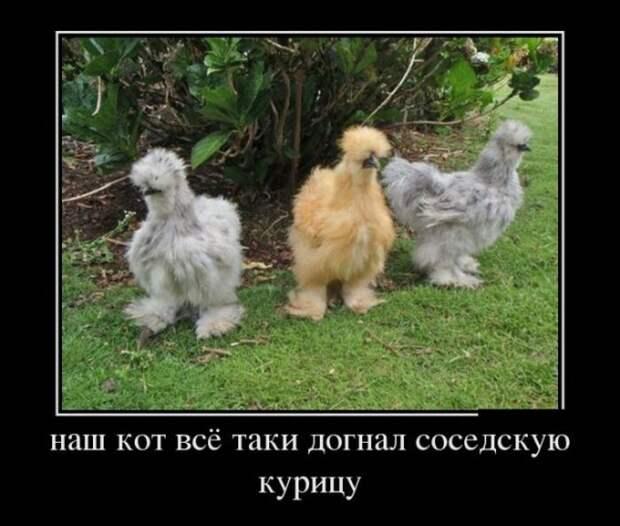 Прикольные и смешные демотиваторы со смыслом (11 фото)