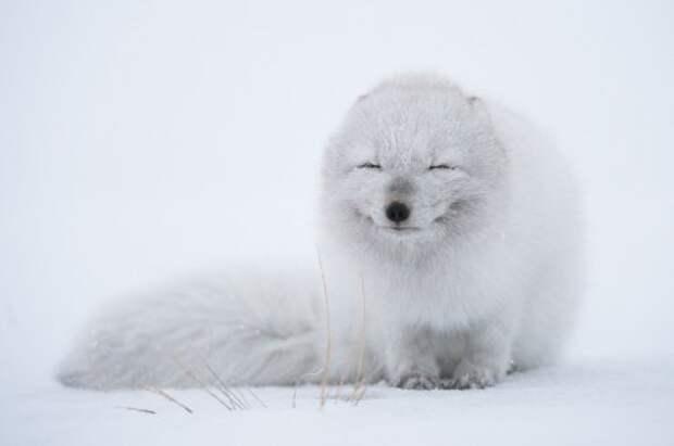 Позитив в фотографиях с животными (32 фото)
