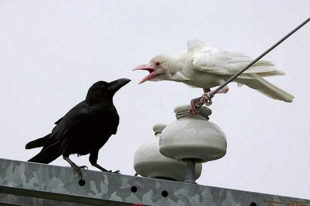 Укромовный одессит пожаловался, что чувствует себя белой вороной