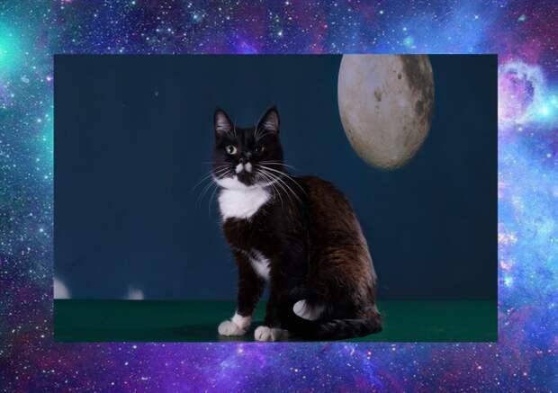 """Санкт-Петербург!!! Приглашаем на выставку-пристройство котов и кошек """"ЧЁРНОЕ, БЕЛОЕ, КОШКИ И ВОЛШЕБСТВО"""""""