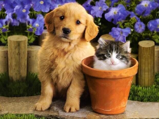 Всех кошек и собак на учет и под контроль – закон уже подписан
