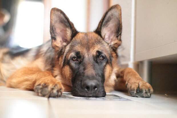 Вакцинация животных от бешенства пройдет в двух диспетчерских пунктах на Волгоградке