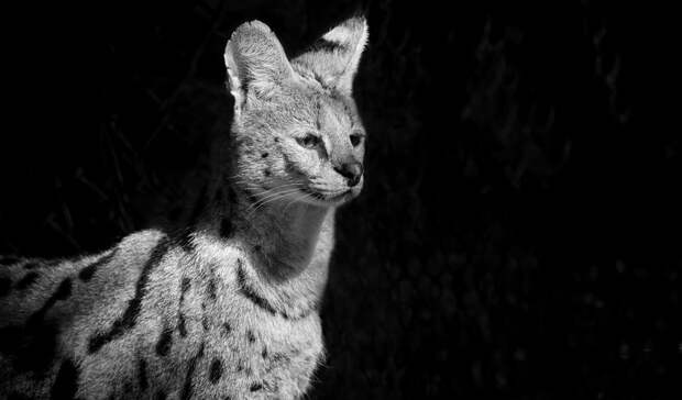 Жительница Сальска заработала 30 тысяч рублей на фотографии чужого котенка