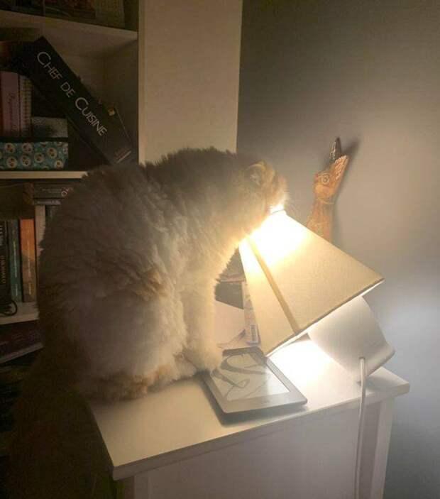 14 забавных фото котов и собак, которых хозяева запечатлели в интересный момент