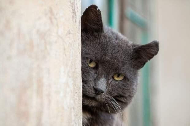 Утром получал орден, а ночью «брал» сберкассу: сериал «Черная кошка» покажет советских «оборотней»