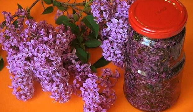 Цветы сирени помогут вылечить суставы!