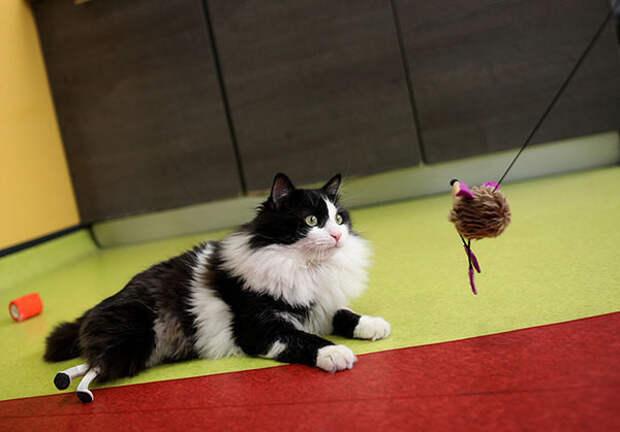 Кот по имени Пух получил новые лапы после ДТП