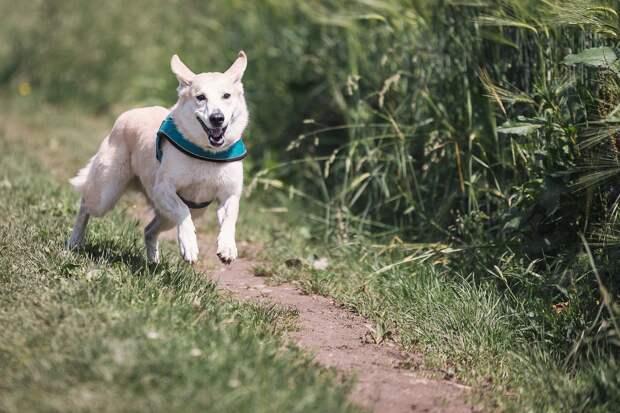 Первая площадка для выгула собак появится в Ижевске в парке «Тишино»