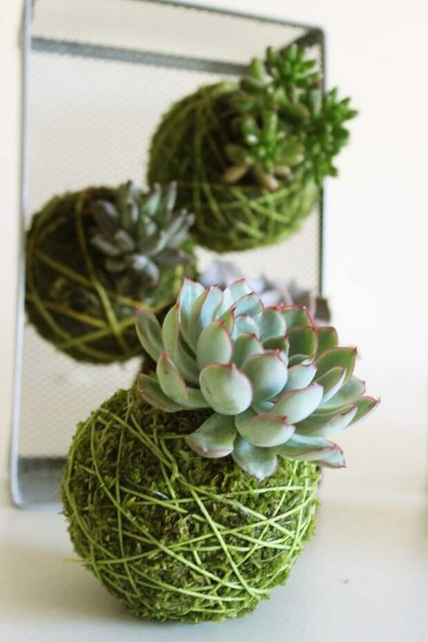 домашние растения для начинающих