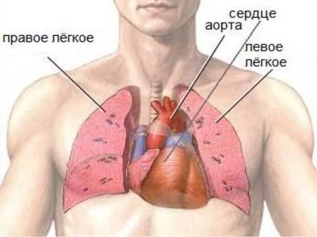 Простая техника для оздоровления внутренних органов без лекарств