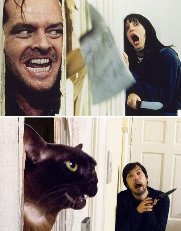Парень с помощью кошки воссоздает кадры известных фильмов (5 фото)
