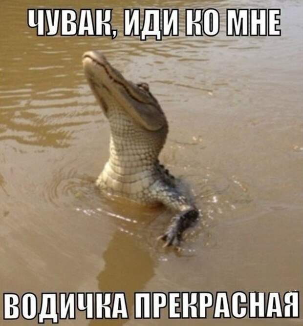 1477474324_memy-24