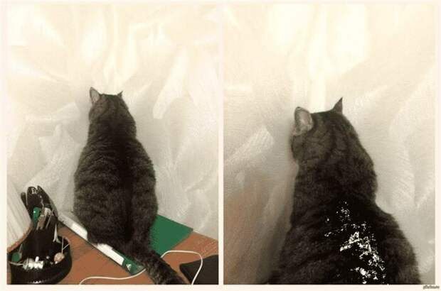Вот так выглядит настоящая кошачья обида
