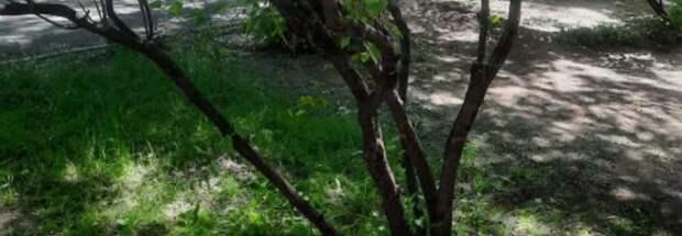 Газон убрали от мусора во дворе дома по Новочеркасскому бульвару