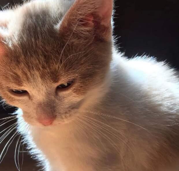 В Митине котятам ищут новую семью