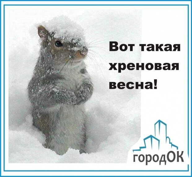 3416556_imageproxy_1_ (700x644, 230Kb)
