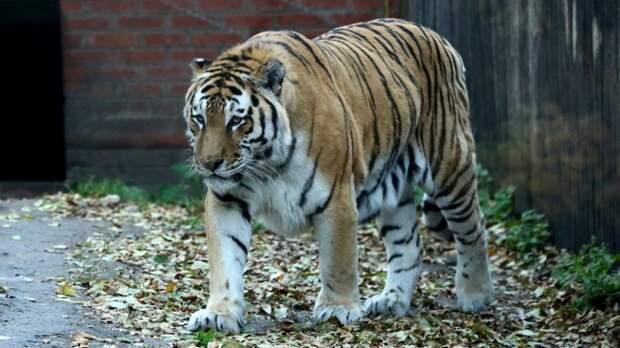 Онкологическое заболевание стало причиной смерти главного символа зоопарка Пензы