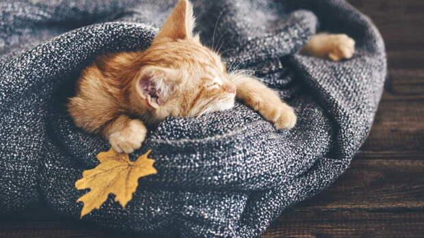 Уход за кошкой осенью: 4 важных пункта